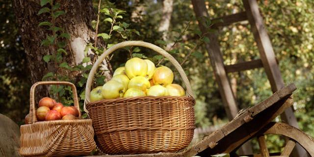 En hyllning till svenska äpplen