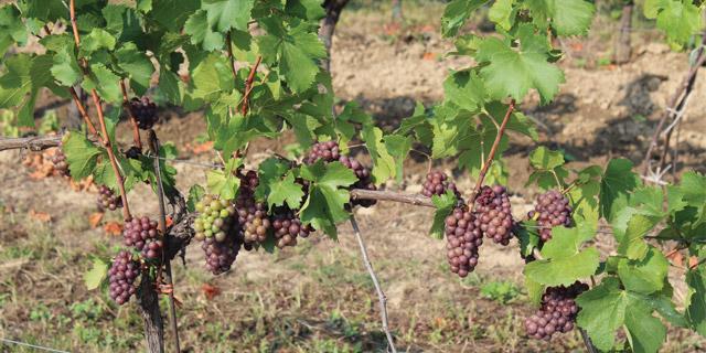 Spännande viner och vackra bakverk